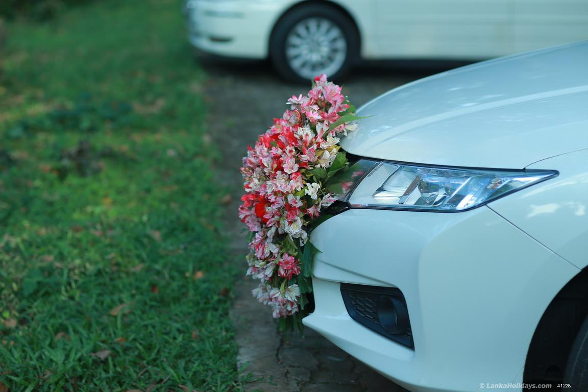 Sri Lanka Car Rentals Hire Wedding Car Honda Grace For Rent